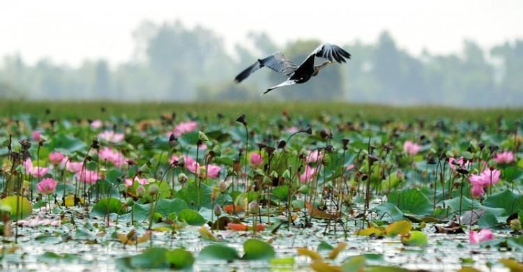 ĐỒNG THÁP - AN GIANG - CẦN THƠ: Khám phá vẻ đẹp Tây Nam Bộ (3 ngày) - Khách sạn 3 sao