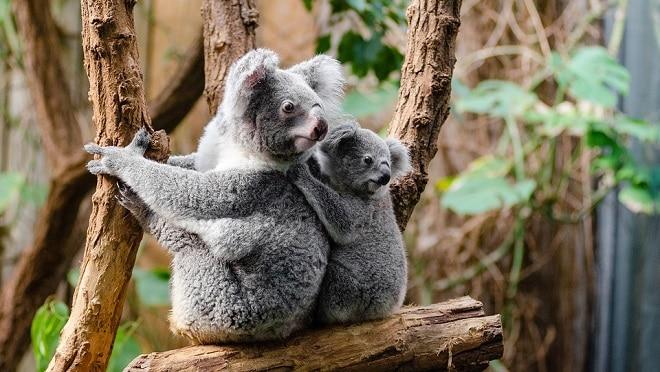 Tour Châu Úc - Khám phá những điều thú vị tại nước Úc xinh đẹp